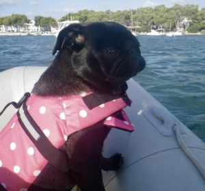 dog-on-boat-with-pink-lifevest