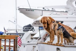 two-dogs-on-boat