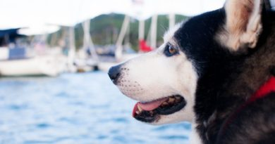 tips-sailing-with-dogs